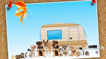 Family holidays and family caravan holidays are great – but do all the pets need to come, too?!